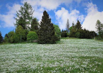 06 - La neige de mai