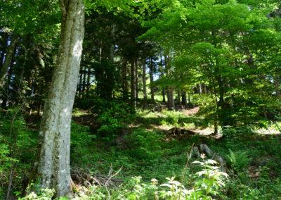 07 - La forêt